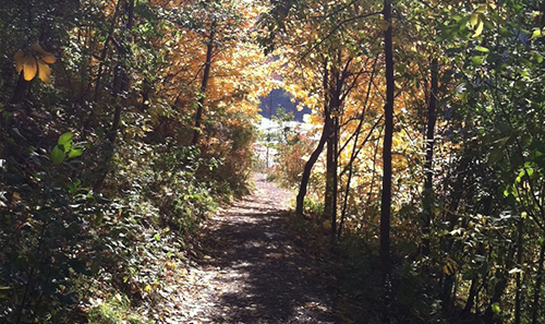 NYS Parks Walk: A Stroll Through the Woods